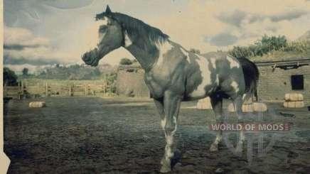 Grey overo American painthorse