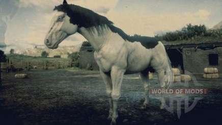 Splashed white American painthorse