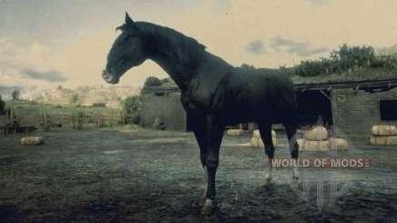 Black Kentucky horse