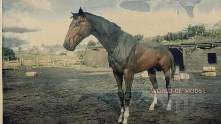 Dark red horse of the Turkmen