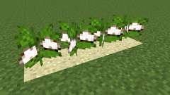 Desert Cotton Mod para Minecraft