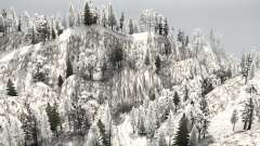 Snow Ridge Logging