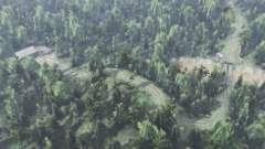 Grande floresta para Spin Tires